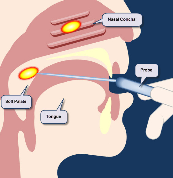 Nasal Cavity and Mouth Annotated